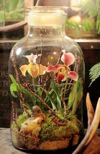 Как вырастить чудо-сад в изолированном пространстве, например, в бутылке