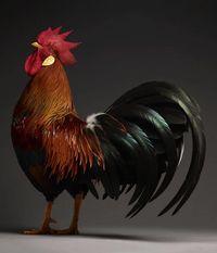 10 невероятных портретов куриц, которые прекрасны и знают об этом