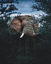 Донал Бойд так снимает животных, что от фотографий невозможно оторваться