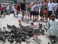 От голубя к человеку: какими заболеваниями чревато общение с голубями