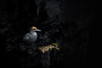 Лучшие работы с Международного конкурса фотографии птиц 2018