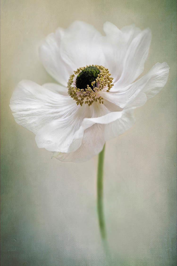 Победители конкурса крупных планов International Garden Photographer