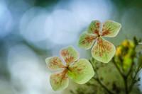 Волшебные фото, победившие на конкурсе Садовый фотограф года 2018