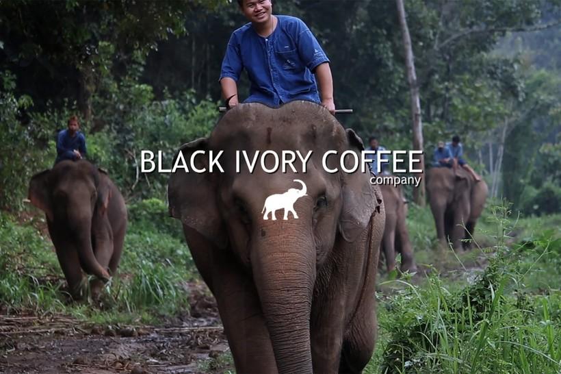 Самые дорогие сорта кофе в мире, которые проходят ферментацию в желудках животных