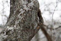 Совы-невидимки: 16 фото, на которых найти сову — задача не из легких