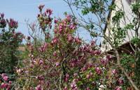 Весной в Хевизе по-особенному красиво