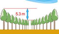 Загадочные круги деревьев в японском лесу — результат любопытного эксперимента