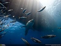 20 лучших фото живой природы от National Geographic Photo Contest 2014