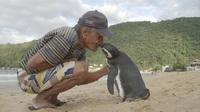 Удивительная история этого пингвина всего за пару дней покорила весь мир!