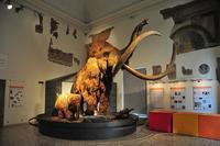 Мамонты в музее естественных наук