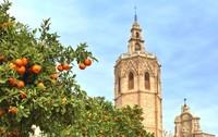 Испания: вот такие клементины растут в Валенсии на улицах города