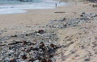 Вот такие пляжи встречаются в Индии