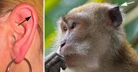 Остатки эволюции: антрополог рассказала, сколько в нас ненужных органов