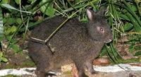 Где живет самый древний заяц в мире, который умеет лазить по деревьям