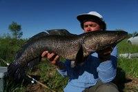 Рыбы, которые умеют ползать по земле и дышать воздухом, захватывают водоемы США
