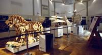 Задумка Леонардо ожила спустя 500 лет: итальянские инженеры воссоздали льва