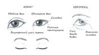 Почему у китайцев, корейцев и японцев узкие глаза