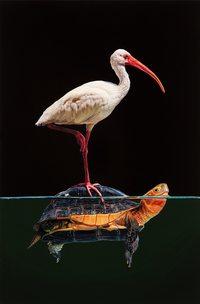 Художница изображает наземных животных, погруженных в поднимающуюся морскую воду