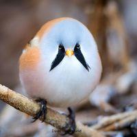 Смешная овальная птица, которая делает безупречный шпагат